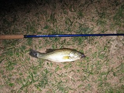 Bass caught fishing at night with a Tenkara Rod!