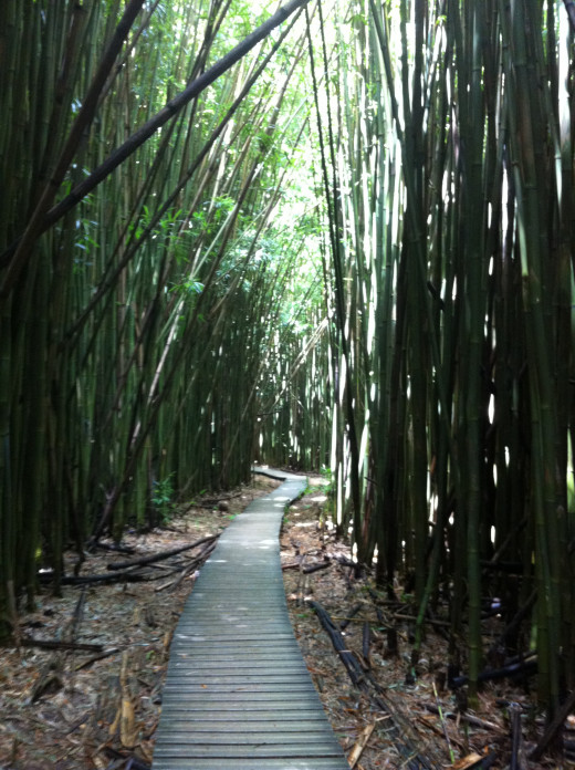 The bamboo forest in Oheo Gulch.