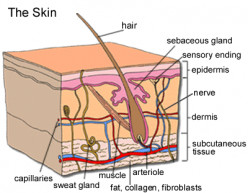 7 Best Skin Care Facts