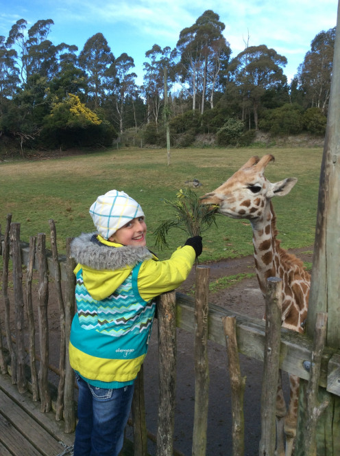 Feeding the Baby Giraffe, Fernando
