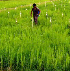 Indian Agriculture: An Overview
