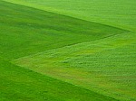 Lawns look and feel splendid