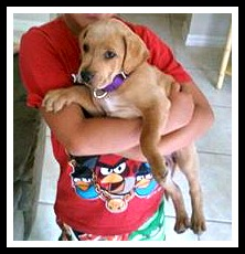 Tinker, A Retriever Mix puppy, adopted at 6 weeks and being held by her new best friend.
