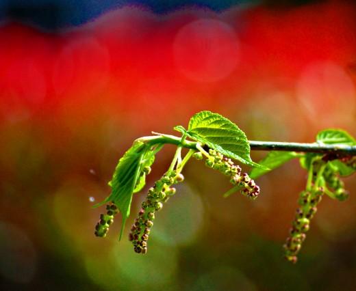Spring Colors photo by Bron Praslicka