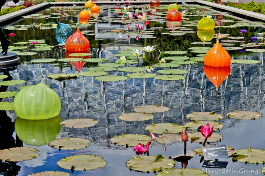 Lily pond shows refection of Climatron.