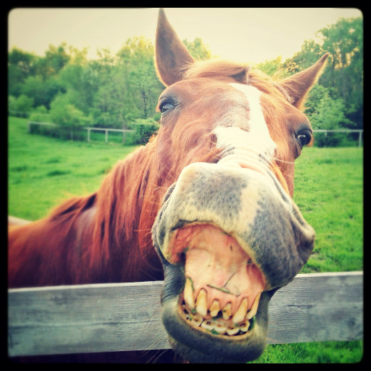 This is a happy horse acting a little goofy