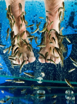 A Fishy Pedicure/Doctor Fish of Garra Rufa/Dr Spafish