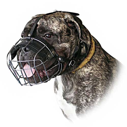 Here you can clearly see that the dog is able to pant as usual, and the holes are large enough to allow both treat training and drinking. The muzzle is secured both behind the neck and between the ears.
