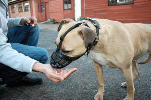 Treat training is necessary to help ensure that your dog views the muzzle not as a punishment, but something positive to aid in training and to reduce unwanted behavior.