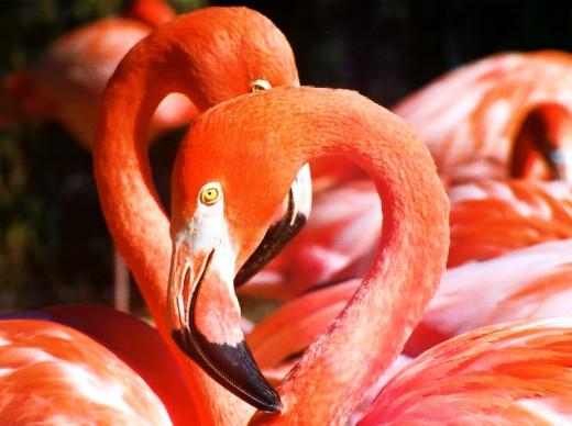 Flamingos photo by Bron Praslicka