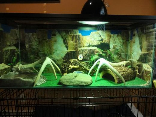 Bearded dragon tank complete with repti carpet, hide spot, basking spot and heat lamp.