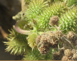 Minnesota Horticulture: Wild Plants - Magnified Five Times