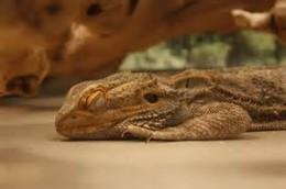 Let sleeping dragons lie.