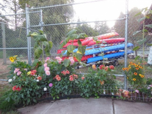 Here is the full spectrum photo of flowers and kayaks at a lake near my home.