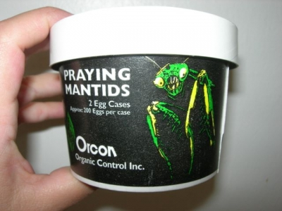 Try Some Mantids