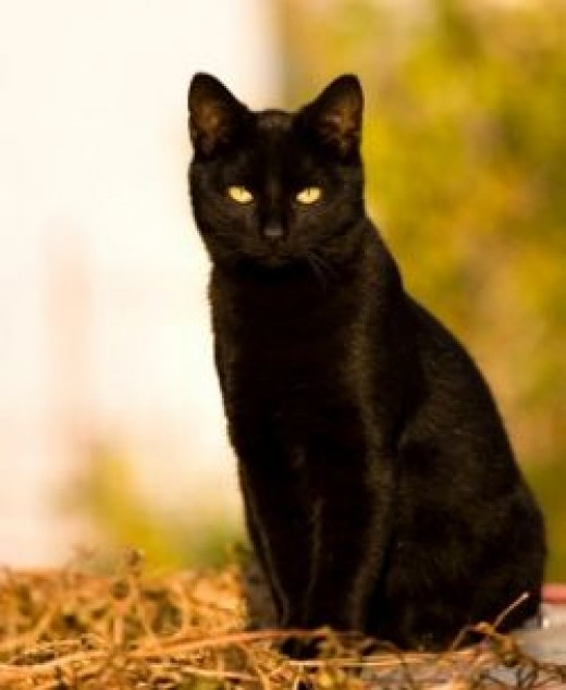 Black Cats are not evil or bad luck. Treat them kindly!