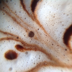 Here's one of my most recent cups of cocoa, out at a neighborhood cafe. I've been playing around with a clip-on lens that allows me to shoot macro photographs of my cocoa foam using my iPad.