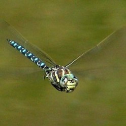 Damselflies and Dragonflies, Dramatic Colorful and Inspiring