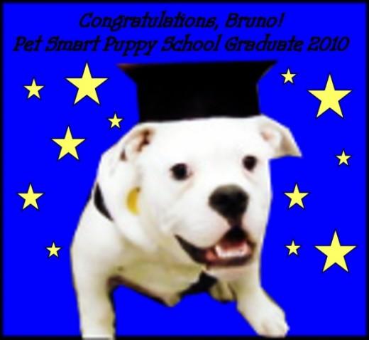 Bruno the graduate