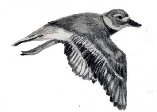 One of the drawings of Tiny in the book done in graphite.