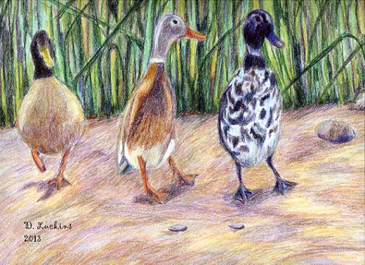 Queen Sheba and her entourage, some of the ducks in the book.  I did this drawing in colored pencil.  Queen Sheba was based on a duck named Oreo.