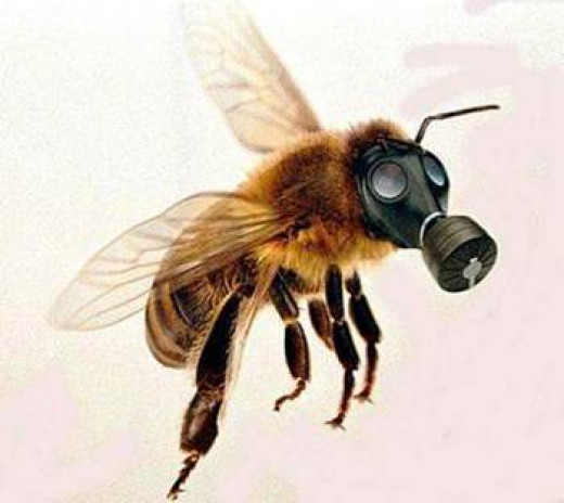 Toxic pesticides killing honey bees