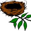 MagpieNest profile image