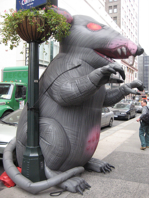 Strike Rat