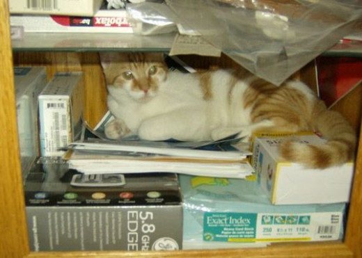 If she puts anything else in here, I won't fit.