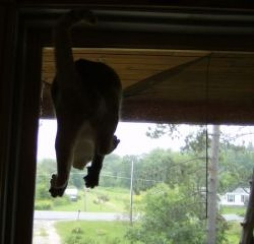 So much for a screen door.