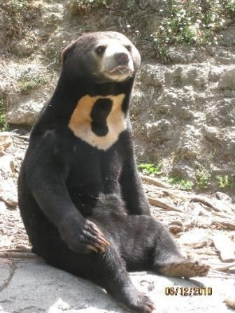Audobon Zoo