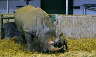 Kolmarden Zoo new Baby girl