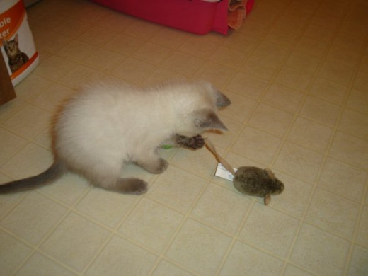 Playing with her very first toy mouse, which you will see featured farther down.