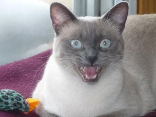 Angry kitty.