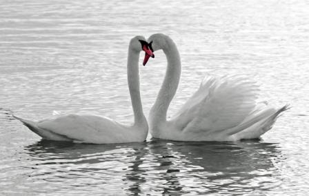 Love: sxc.hu/majaFOTO