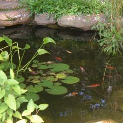Our Small Garden Pond