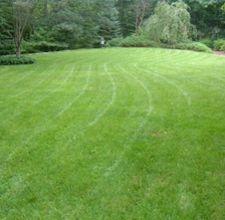 Our freshly mowed lawn