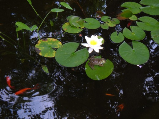Our Garden Pond