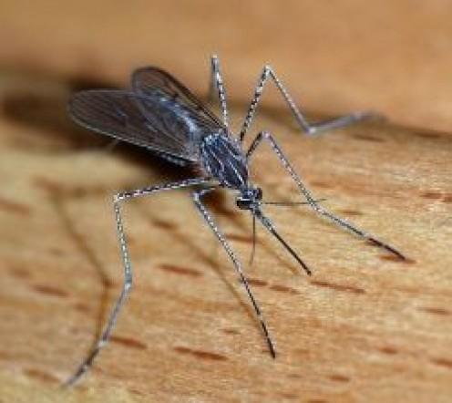 How To Make a Homemade Mosquito Trap