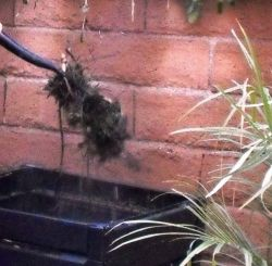 Compost heat as Steam