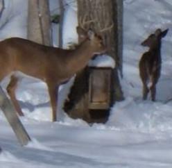 DIY Deer Feeder Plans for How To Make a Homemade Deer Feeder