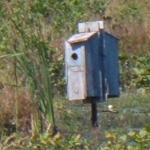 Wood Duck Nesting Box