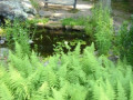 Catching Rainwater: How To Build A Rain Garden