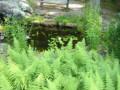 Catching Rainwater: How To Design A Rain Garden