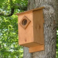 Screech Owl House Plans: How To Build A Screech Owl Box