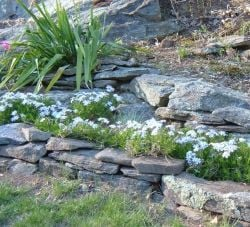 Creating A Landscape That Rocks!
