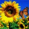 Sara2901 profile image