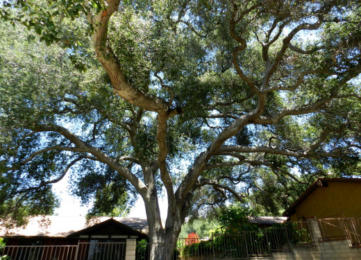 This oak canopy covers the width of this property.