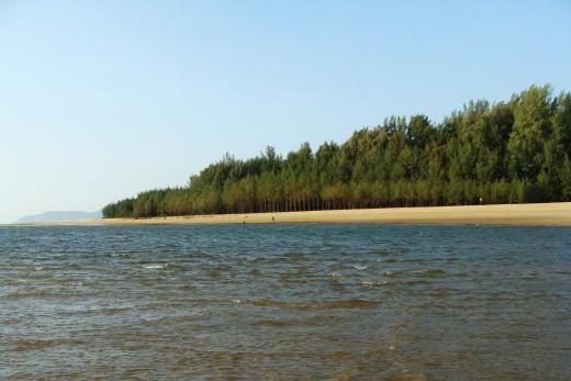 Mangroves help arrest soil erosion