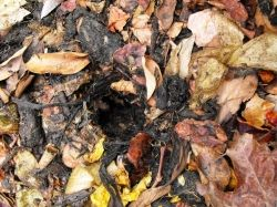 Compost mouse den